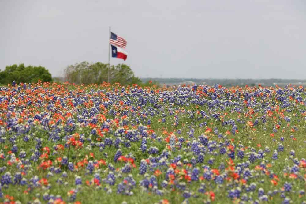 field of flowers and flag of the US and Texas
