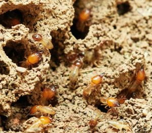 Termites Eating House Sell as-is