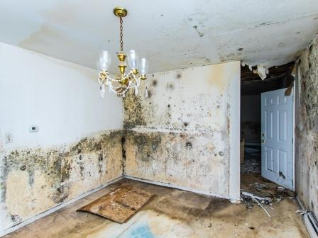 heavy mold damage house sold to cash buyer